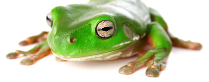 Froggy Stock Photo
