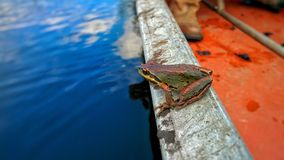 Froggy Immagine Stock