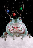 Froggy Reindeer. A whites tree frog is sitting in the snow wearing fake reindeer antlers Stock Image