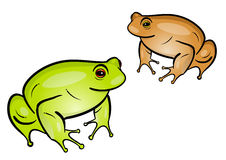 Frogs Royalty Free Stock Image