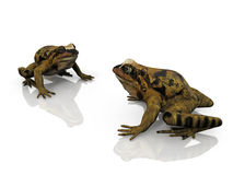 The frogs Stock Photos