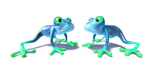 Frogs Stock Image