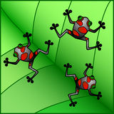 Frogs vector illustration