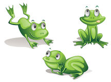 Frogs. Illustration of three frogs on white Stock Images