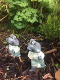 The frogs admiring the garden. A Gloucester garden 2017 Royalty Free Stock Image
