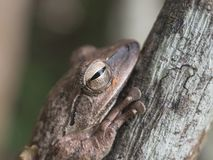 Frogs blend in with trees stock photos