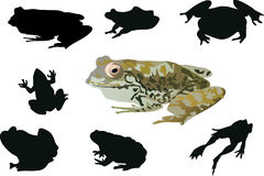 Frogs collection isolated on white Stock Photo