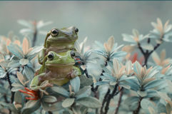 2 frogs Royalty Free Stock Images