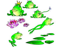 Frogs doing their stuff Stock Images