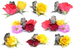 Frogs, flowers Royalty Free Stock Image