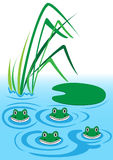 Frogs. Illustration of four funny frogs in water Stock Image