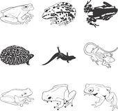 Frogs and lizards. Set of nine illustrations of various frogs and lizards Stock Photography
