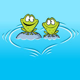 Frogs In Love sitting on a stone in water Stock Image