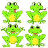 Frogs set on white background in vector EPS 10.  Stock Photos