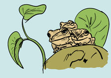 Frogs Royalty Free Stock Images
