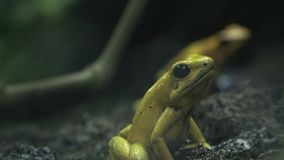 Frogs, Toads, Amphibians, Animals, Nature stock video footage