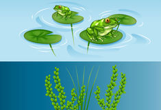 Frogs on water lily and underwater scene Stock Image