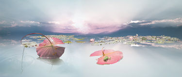 Frogspawn sob a folha de Waterlily foto de stock