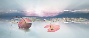 Frogspawn unter Waterlily-Blatt Stockfoto