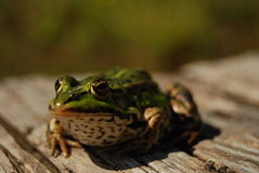 Frogy. Nature is beautiful. Frog at countryside Stock Photo