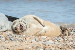 Frohe Dichtung auf einem Strand stockfotos