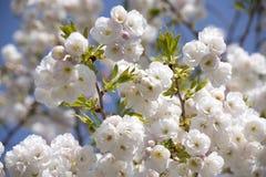 Frohe Stimmung des Blütenstandfrühlinges stockfotografie