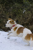 Froher Hund, der Spaß im Schnee hat Stockbild