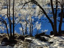 Froid bleu d'hiver de fond d'arbres congelés Photographie stock libre de droits