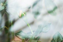 Froid de ressort en dehors de la fenêtre avec des fleurs sur le rebord de fenêtre photo libre de droits