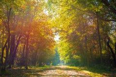 Froid mais beau matin d'automne photographie stock