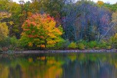 Froid scénique de lac d'eau douce d'amour de tourisme de voyage de nature de chute d'hiver d'automne de réflexion d'arbres de cou Images stock