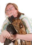 Frolic. Two happy boxer dogs playing with their boss, making her loose her glasses royalty free stock images