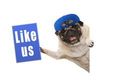 Frolic pug puppy dog holding up blue like us sign, hanging sideways from white banner stock photo