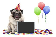 Frolic smiling birthday party pug dog, with blackboard, confetti and balloons decoration stock photo