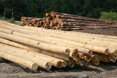 Free From Tree To Utility Pole Stock Photography - 10972462