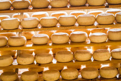 Fromage âgé de moutons photo libre de droits