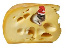 Fromage et rat Photographie stock