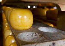 Fromages d'édam à la ferme de fromage Photo stock