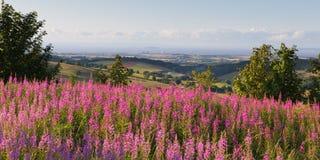 Fron de la central nuclear del punto de Hinkley el campo BRITÁNICO de Somerset England de las colinas de Quantock con las flores  Foto de archivo