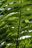 Frond Stock Photos