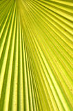 Frond. Detailed pattern and texture of green palm leaf Stock Photo