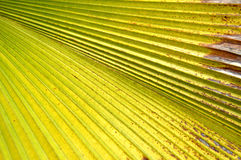 Frond Royalty Free Stock Photo