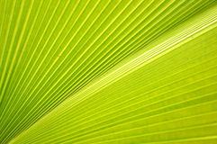 Frond Royalty Free Stock Photos
