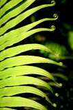 Frond composition Stock Image