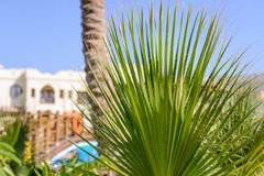 Frond of a fan or cane palm at a tropical resort. Fresh green frond of a fan or cane palm with a tropical resort and swimming pool in the background conceptual Royalty Free Stock Photography