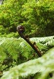 Frond paproć wzrasta nad tło zieleni liście Zdjęcia Royalty Free