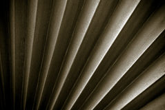 Frond in Sepia. Fronds of a palm tree in sepia tone royalty free stock photography