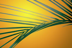 Frond at sunset royalty free stock image