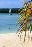 A fronda da palma com areia dourada e o foco macio encalham Imagens de Stock