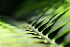 Fronda da palma do close-up da escuridão à luz solar foto de stock